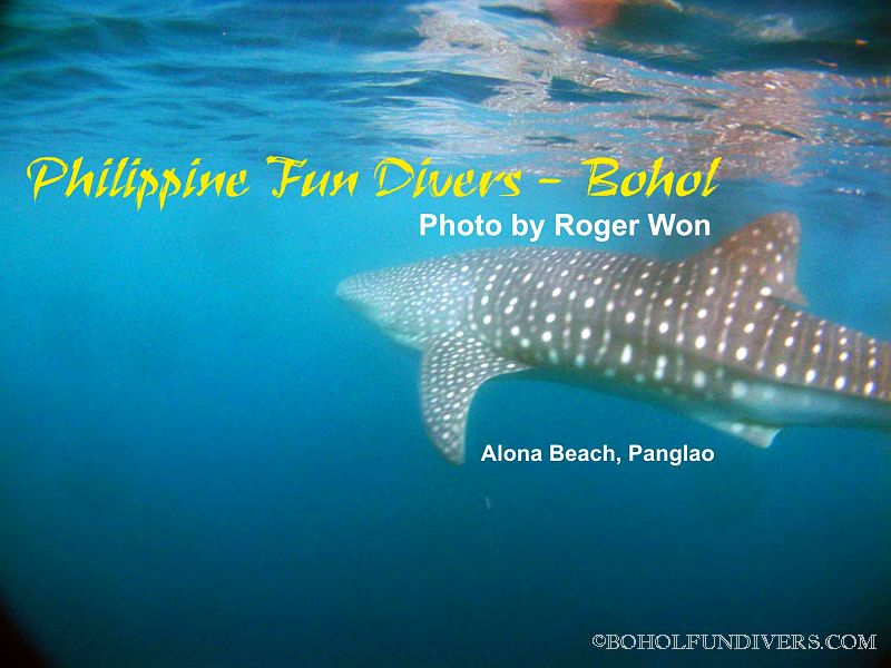 whaleshark-1-alona-jan-01-2010