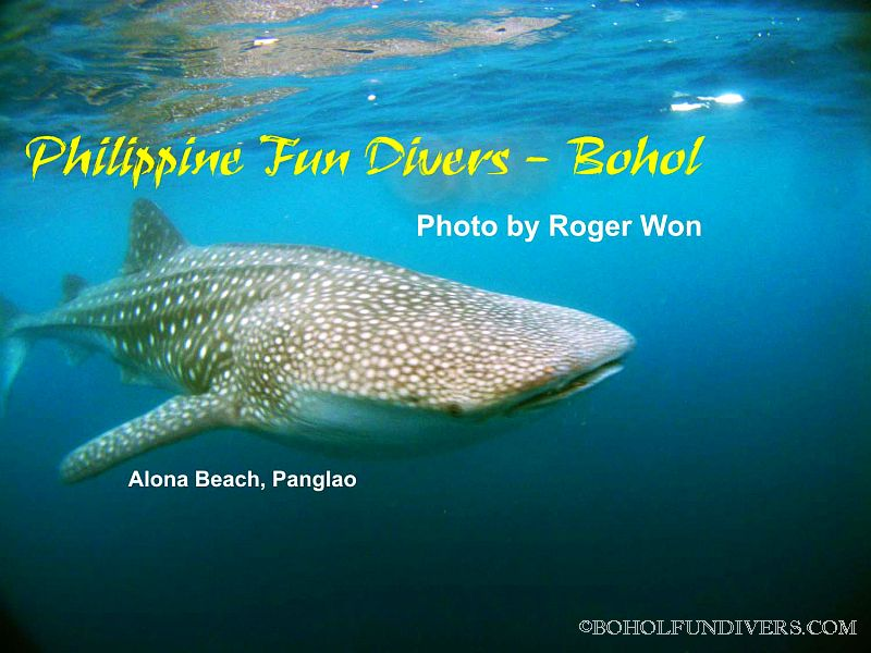 whaleshark-3-alona-jan-01-2010